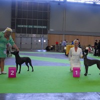 WORLD DOG SHOW in Paris 2011, May I proudly present JUNIOR WORLD WINNER - YOLOXOCHITL EoD