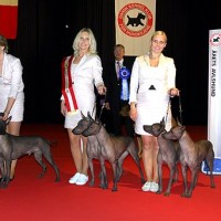 TLACATL - BREED DOG OF THE YEAR 2011 (all breeds) in Denmark