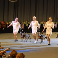 NORWEIGIAN WINNER SHOW 2011, BIS-2 PROGENY GROUP!!