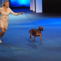 FINNISH WINNER SHOW - Int show FKK, Helsinki, 5 December 2011