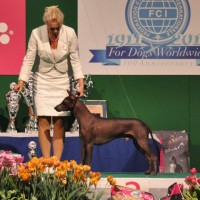 EURODOG WINNER SHOW 2011, Int Show Leuwaarden, Holland, 5 september