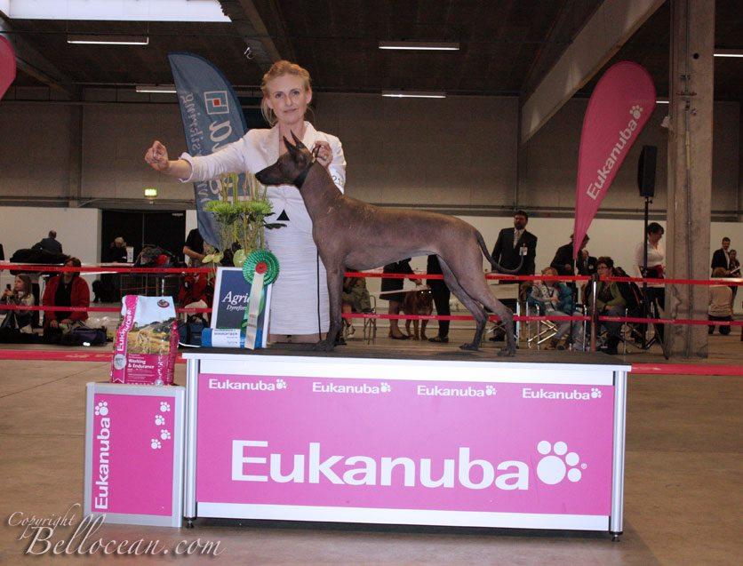 YOlli BIG4 DKK Fredericia 2012