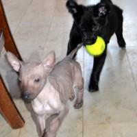 Puppies Ixtlahuacan - Xibalba´s Poyahuac